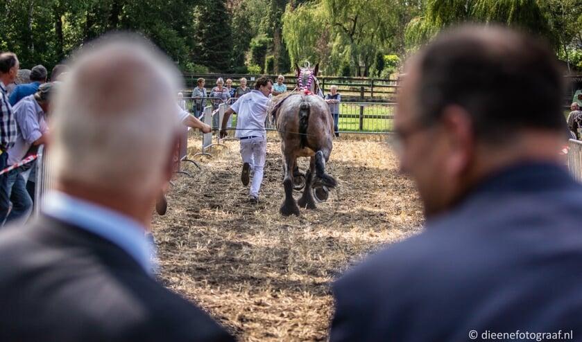 De paarden trokken veel bekijks.   | Fotonummer: 60986f