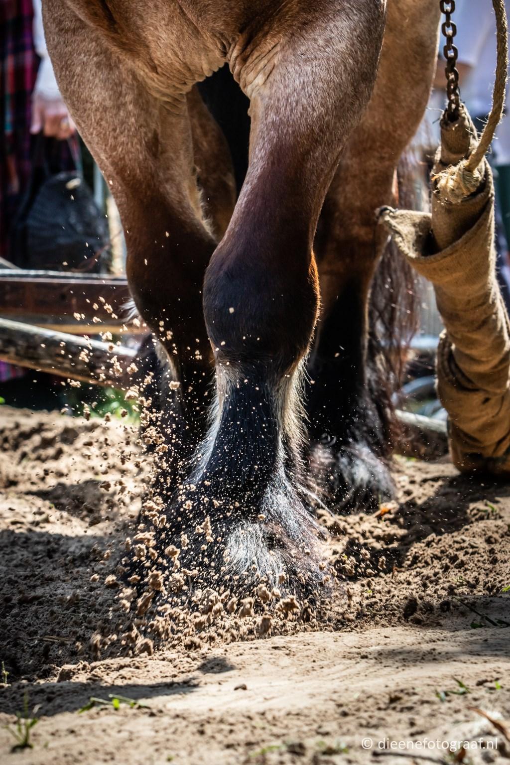 Foto: www.dieenefotograaf.nl © MooiRooi