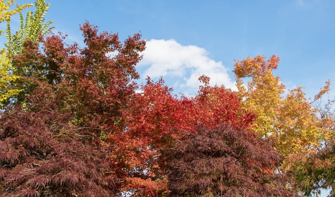Gekleurde bomen bij Van den Berk.