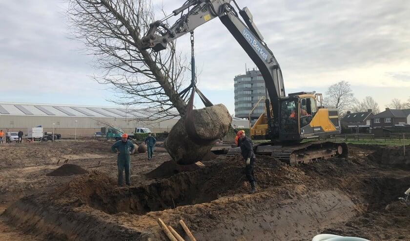 De grootste boom wordt op zijn plek gezet.   | Fotonummer: e6a7d1