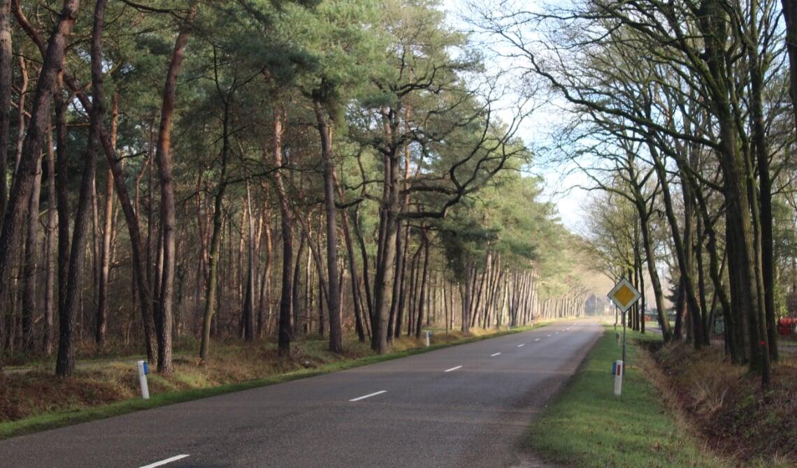<p>De Lieshoutseweg.</p>