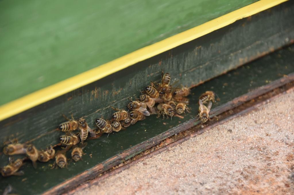 De bijen op de volkstuin Foto: Hans van den Wijngaard © MooiRooi