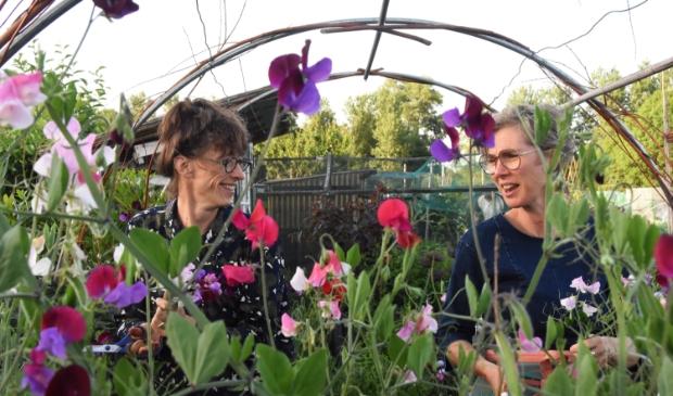 Jacqueline (l) en Jolanda (r) midden tussen de bloemen Foto: Hans van den Wijngaard © MooiRooi