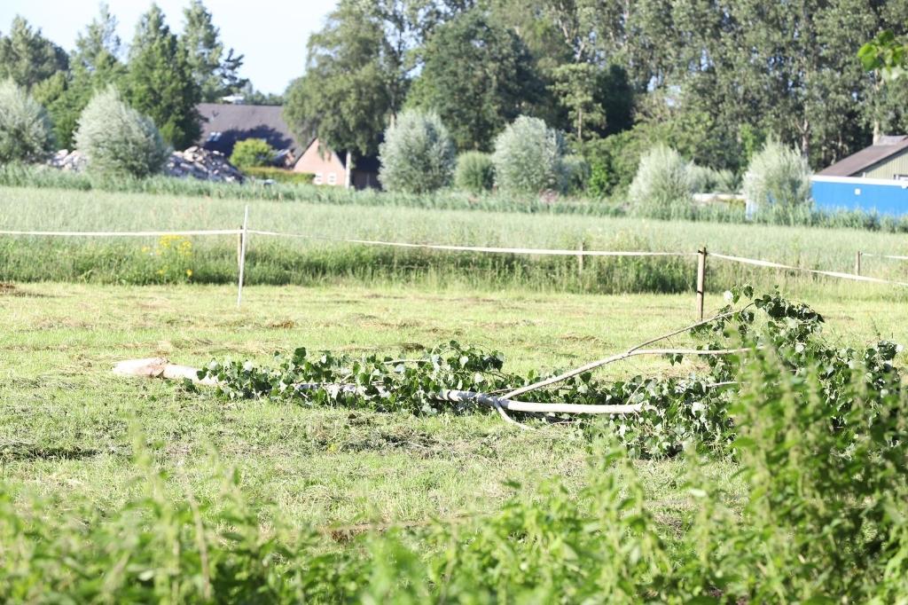 Broekdijk brandweer boomtop Foto: 112 Nieuwsonline © MooiRooi