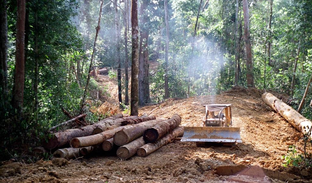 Tropisch bos van Kalimantan.  ( beeld Kate Davison)