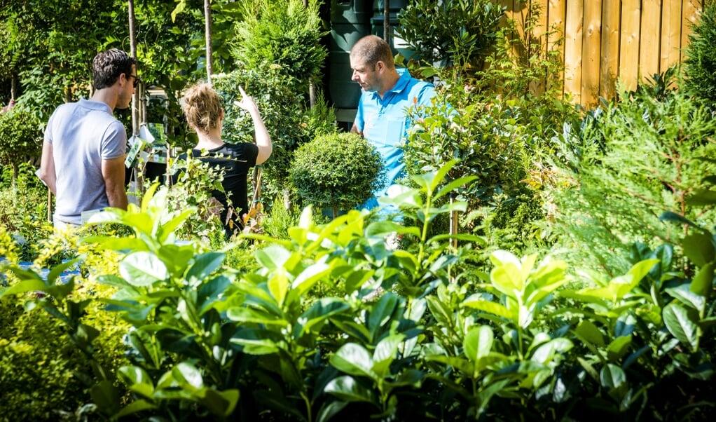 Met het oog op het eigen welzijn is planten aanschaffen geen slecht idee.  (beeld anp / Lex van Lieshout)
