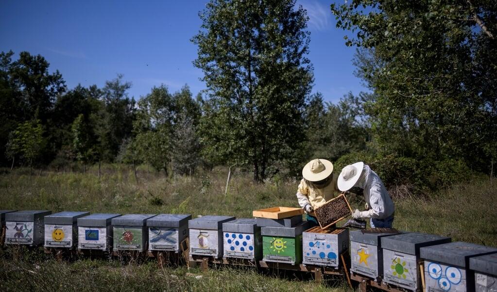 Nederland kan helpen bij watermanagement rond Venetië. Italië kan Nederland helpen bij het omvormen van onze landbouw naar een die meer duurzaam is en mensen meer van lokaal voedsel laat genieten, zoals honing uit Piemonte.  (beeld afp / Marco Bertorello)