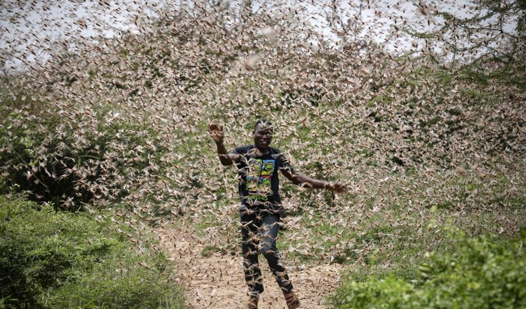 Een boer in Kenia rent door een zwerm sprinkhanen in de hoop ze weg te kunnen jagen.  (epa/ Dai Kurokawa)