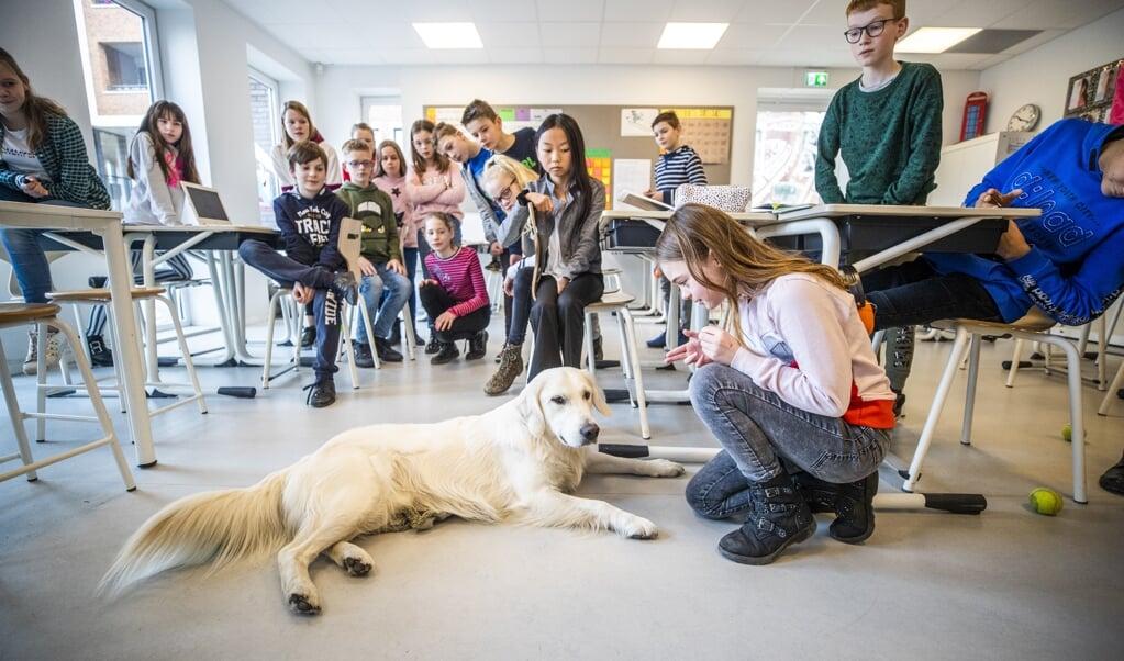 Hond Mads in groep 7 en 8 van basisschool Het Christal in Leusden.  (beeld Jeroen Jumelet)