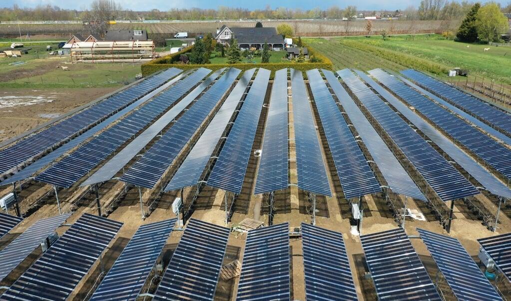 Zachtfruitteler Rini Kusters uit Wadenoijen heeft een wereldprimeur: 4500 zonnepanelen boven zijn fruitgaard.   (beeld vidiphoto)