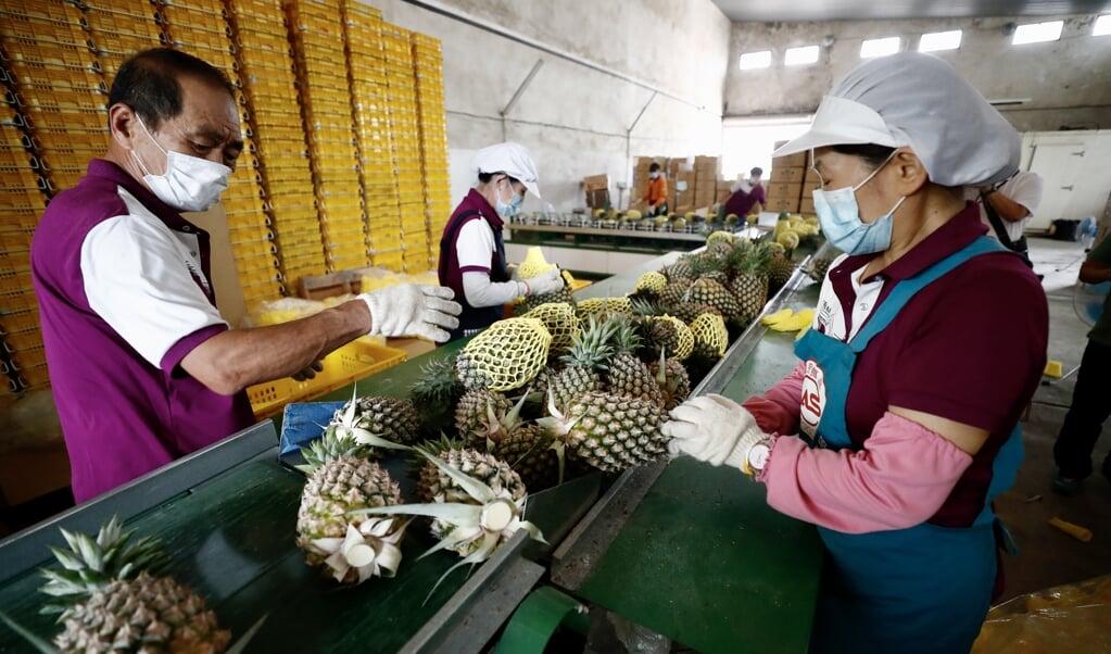 China intimideert en provoceert Taiwan, recentelijk bijvoorbeeld door de import op ananas uit Taiwan te stoppen.   (beeld epa / Ritchie B. Tongo)