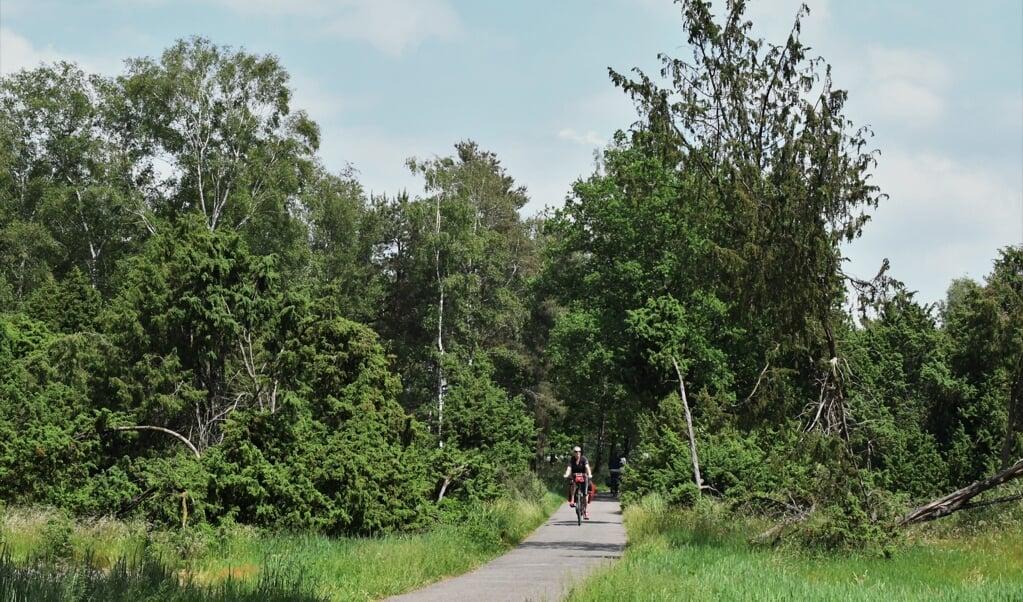 Op het Commissaris Cramerpad fiets je door tussen metershoge jeneverbessen door.  (beeld Theo Haerkens)