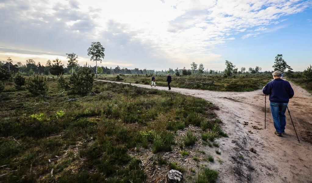 Stiltewandeling over de Noetselerberg bij Nijverdal.  (beeld Maarten Boersema)
