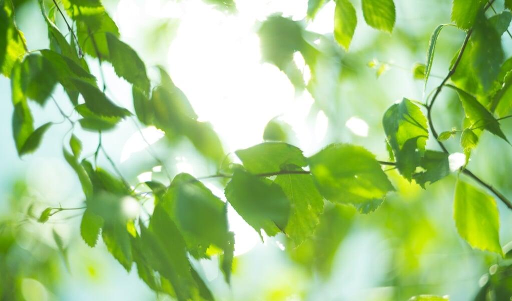 Iemand die bang is hoort ieder blad ritselen. Maar, veelal is het ritselende blad slechts de resultante van een aangename verkoelende bries en niet de vernietigende tornado.   (beeld istock)
