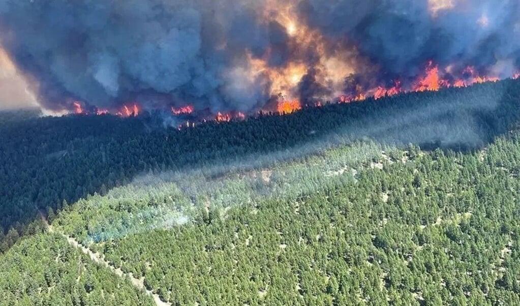 Bosbranden bij Sparks Lake. In deze regio, dicht bij de Rocky Mountains, zijn bosbranden heel zeldzaam. Klimaatverandering lijkt de boosdoener te zijn.  (beeld afp / bc wildfire service)
