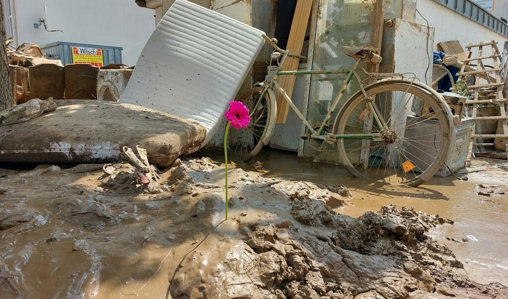 Een bloem die 'bloeit' in het puin, tegenover het huis waar een jonge vrouw verdronk.  (beeld ND)