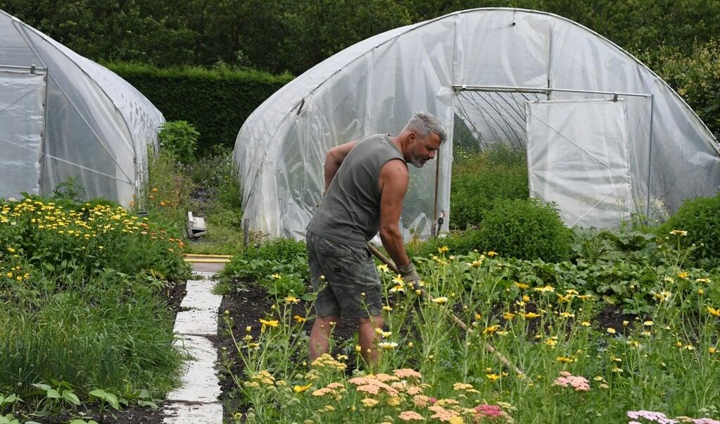 Met korte halen rukt Edwin Florès de ongewenste plantjes los uit zijn perken.  (beeld Theo Haerkens)
