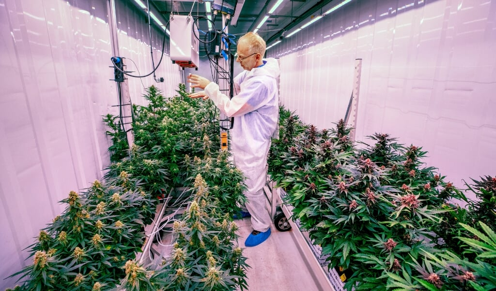 Eric Uleman, oprichter en directeur van CannNext, in een container met medicinale cannabis op een geheime locatie in het zuiden van Nederland.  (beeld Raymond Rutting)