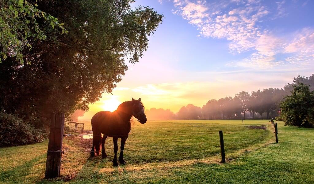 Een paard staat er prachtig bij, terwijl achter haar de zon opkomt in het Drentse landschap.  (beeld Johan Scholtens)