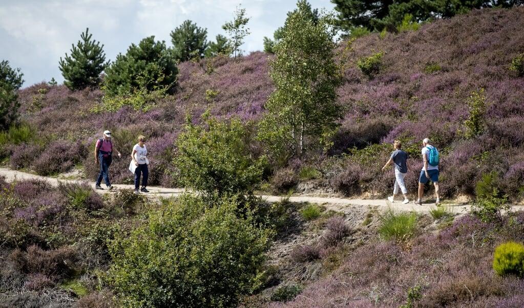 Velen houden natuur graag op afstand, goed voor het weekend of de vakantie. Beeld: wandelaars bij de Posbank.  (beeld anp / sem van der wal)
