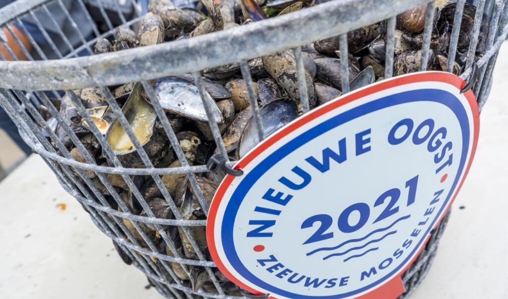 2021-07-07 12:03:39 YERSEKE - Mosselen worden op de Oosterschelde opgevist tijdens de seizoenstart van de Zeeuwse bodemcultuurmosselen.  ANP LEX VAN LIESHOUT  (beeld anp / lex van Lieshout)