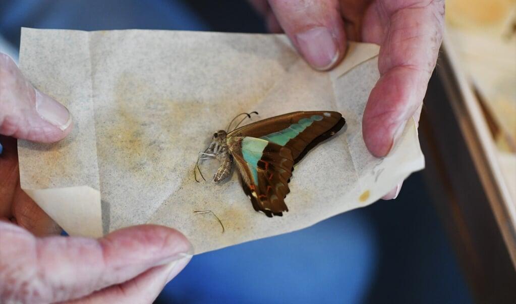 Een papillot is een net zo eenvoudige als ingenieuze manier om een vlinder te verpakken.  (beeld Theo Haerkens)