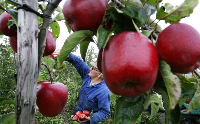 Hollands appeltje
