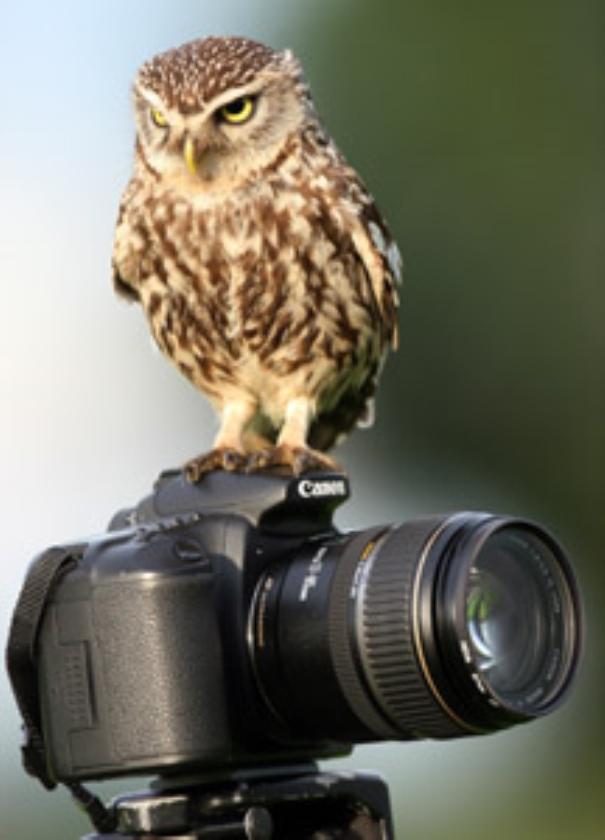 Digitale camera duurder