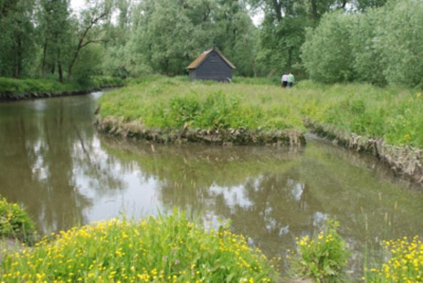 De jungle van Holland