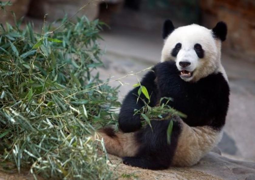 China ontneemt zeven dierentuinen licentie
