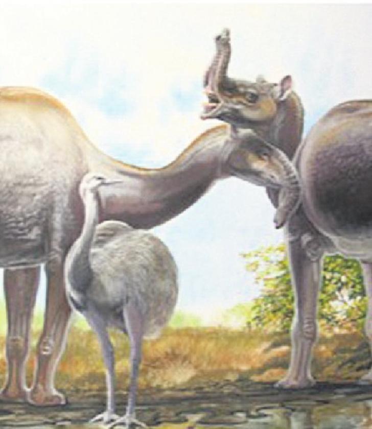 Collageen helpt bij indelen uitgestorven hoefdieren