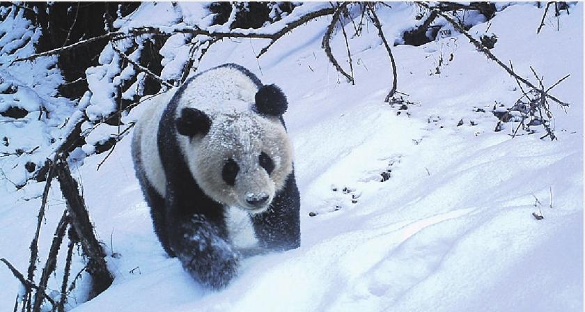 Pandas socialer dan gedacht