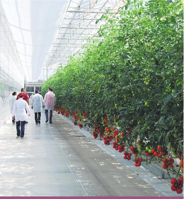 Glastuinbouw verkast naar Turkije