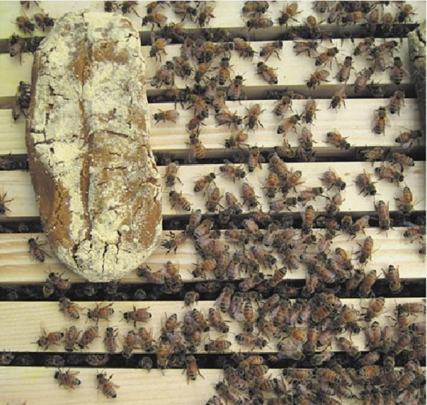Niet alleen pesticiden oorzaak bijensterfte