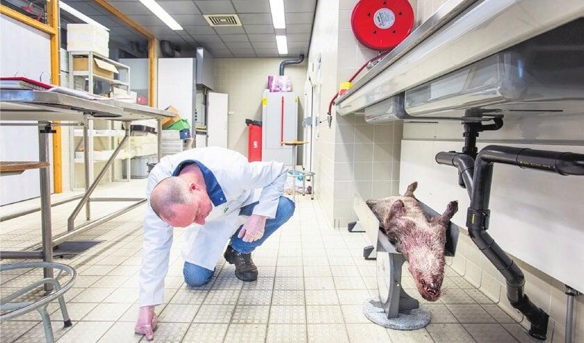 Otter zit te springen om vers bloed