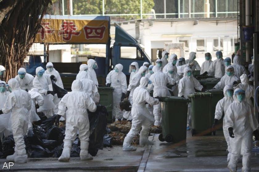 Hong Kong vernietigt Chinese kippen met vogelgriep