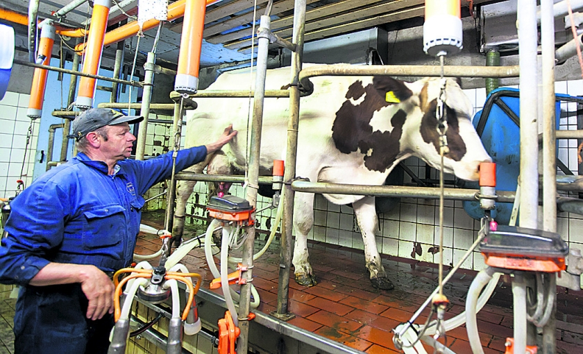 Er is hulp nodig voor melkveehouders  (anp / Koen Suyk)