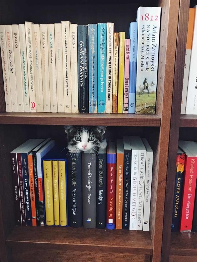 Instagramfoto: Kitten in de boekenkast  (Nicolette de Boer)