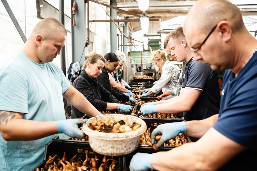 Migranten uit Polen dragen bij aan de bevolkingsgroei in Nederland.  (Katja Poelwijk)