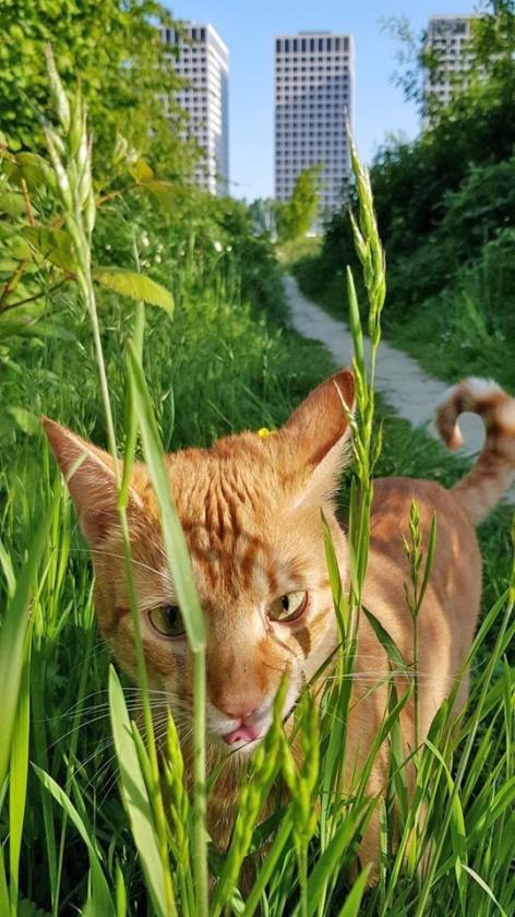 Lee Towers met kat.   (Johan Bakker)