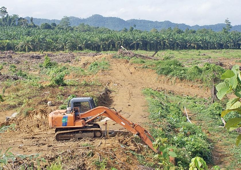 Een stuk bos op het eiland Borneo moet wijken voor een palmolieplantage.  (kyodo)