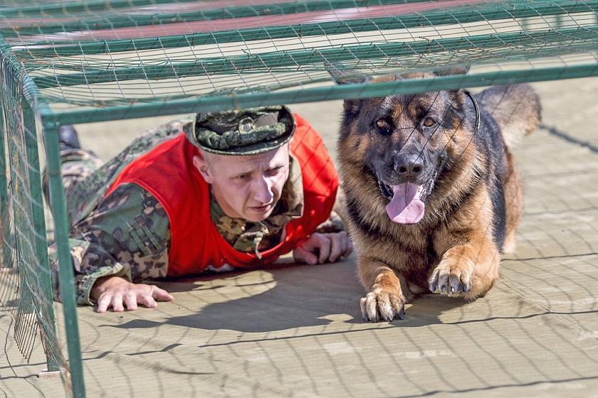Een oefening met een legerhond tijdens de International Army Games, die gelijktijdig met de Olympische Spelen plaatsvonden in Rusland en Kazachstan.  (ap / Sergej Bobjlev)