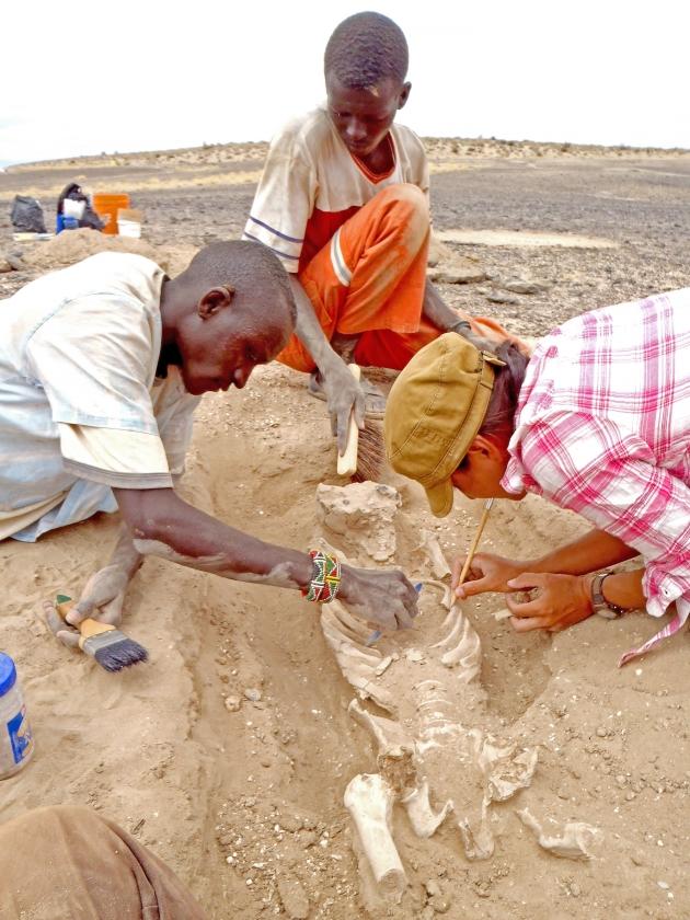 Onderzoekers buigen zich over een skelet dat is gevonden in Kenia, op een plek waar tienduizend jaar geleden een massaslachting plaatsvond.   (ap)