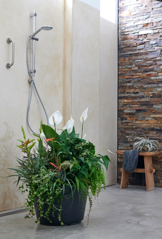 Met de juiste plant krijg je een ontspannen sfeer in je badkamer   (mooiwatplantendoen.nl en maison belle)