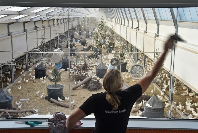 Een medewerkster maakt de ramen schoon van de bezoekersruimte van Kipster.  (Marcel van den Bergh)