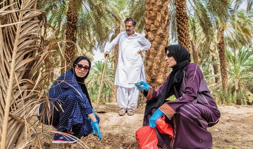 Prof. Blilou (rechts) en leden van haar onderzoeksteam nemen monsters op een plantage in Medina.  (date palm reserach)