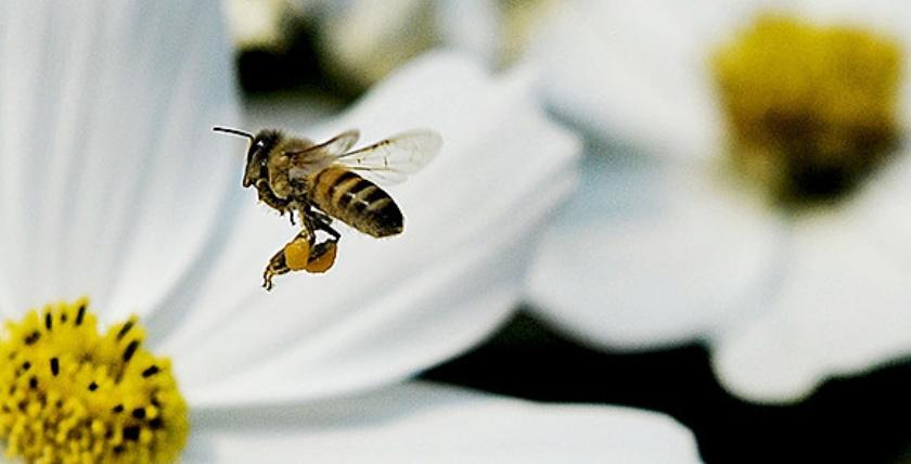 Viral: Insectenvrienden  (ap)