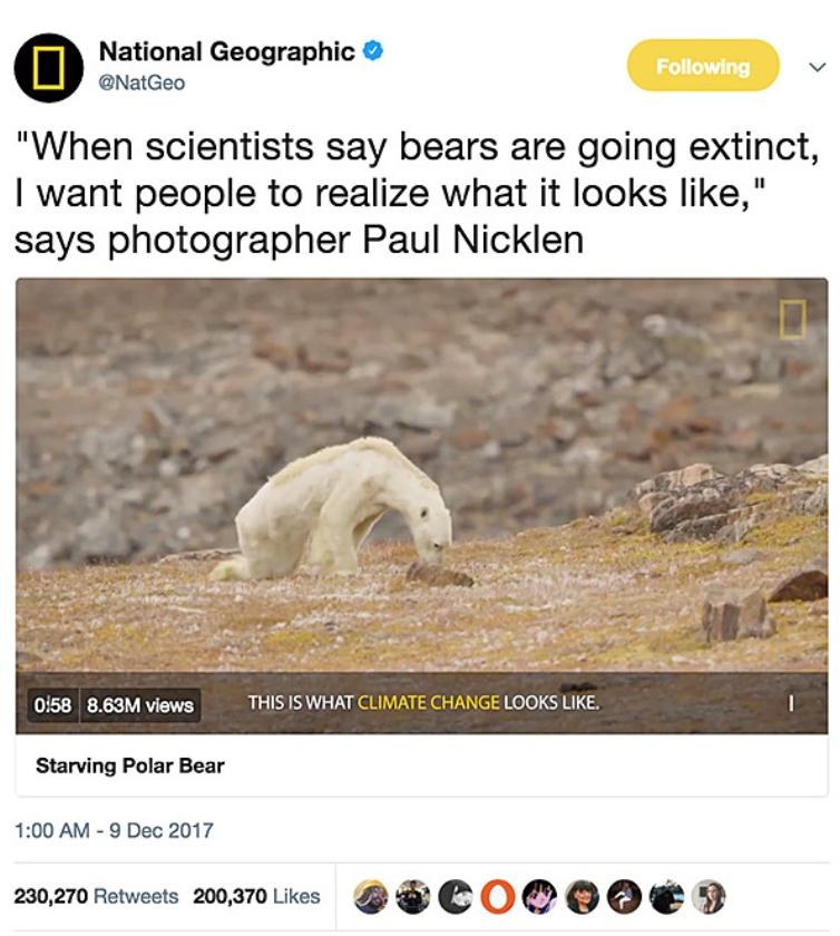 Viral: De stervende ijsbeer  (twitter)