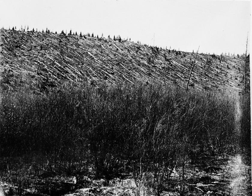 In 1908 werd tweeduizend vierkante kilometer naaldwoud in Siberië in een fractie van een seconde platgeslagen. De eerste foto's, waaronder deze, dateren uit 1927.  (Leonid Kulik)