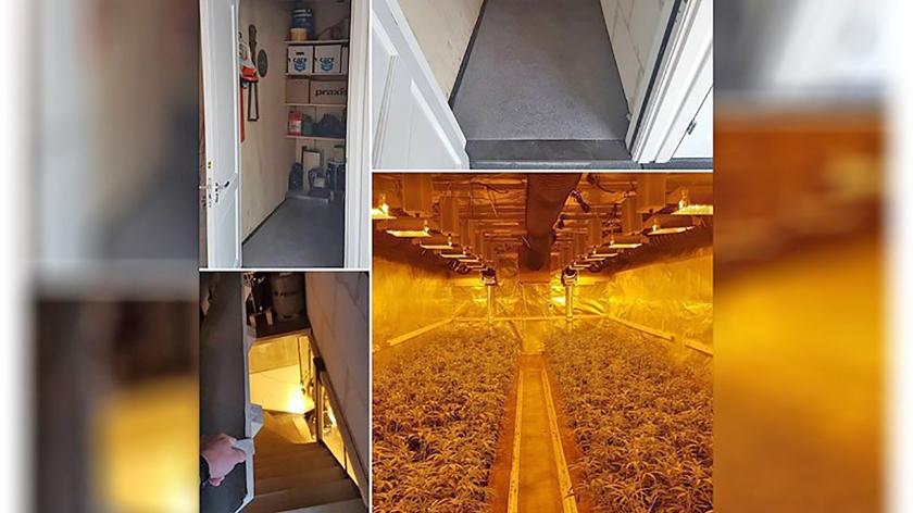 De goed verborgen hennepplantage die de politie Haarlemmermeer deze week vond.  (politie haarlemmermeer)